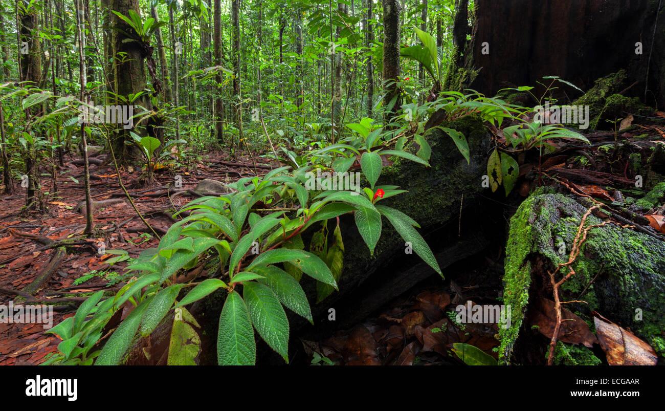 Rainforest image, Canaima National Park, Venezuela. - Stock Image