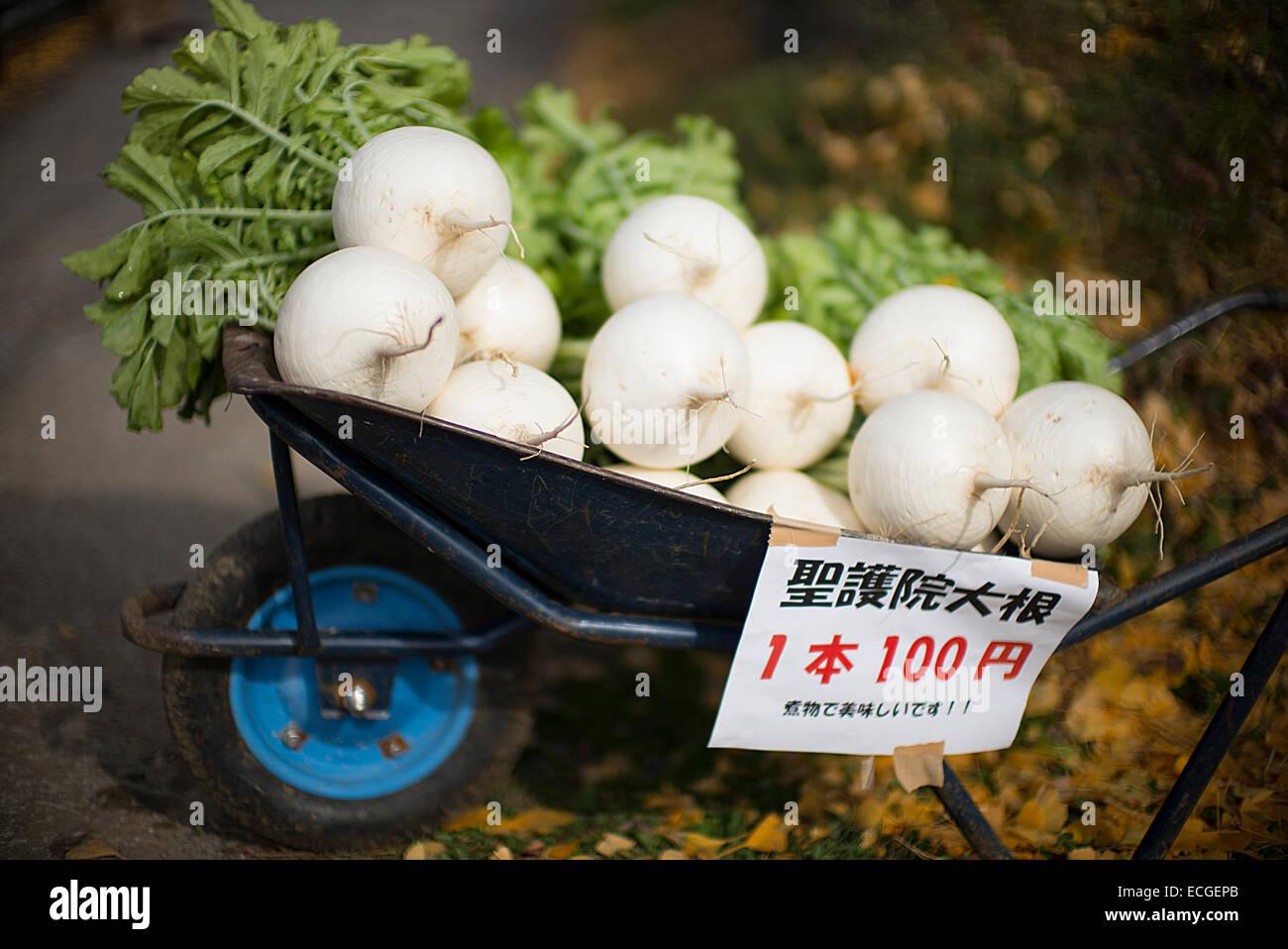 Japanese white radish vegetables in a wheelbarrow. - Stock Image