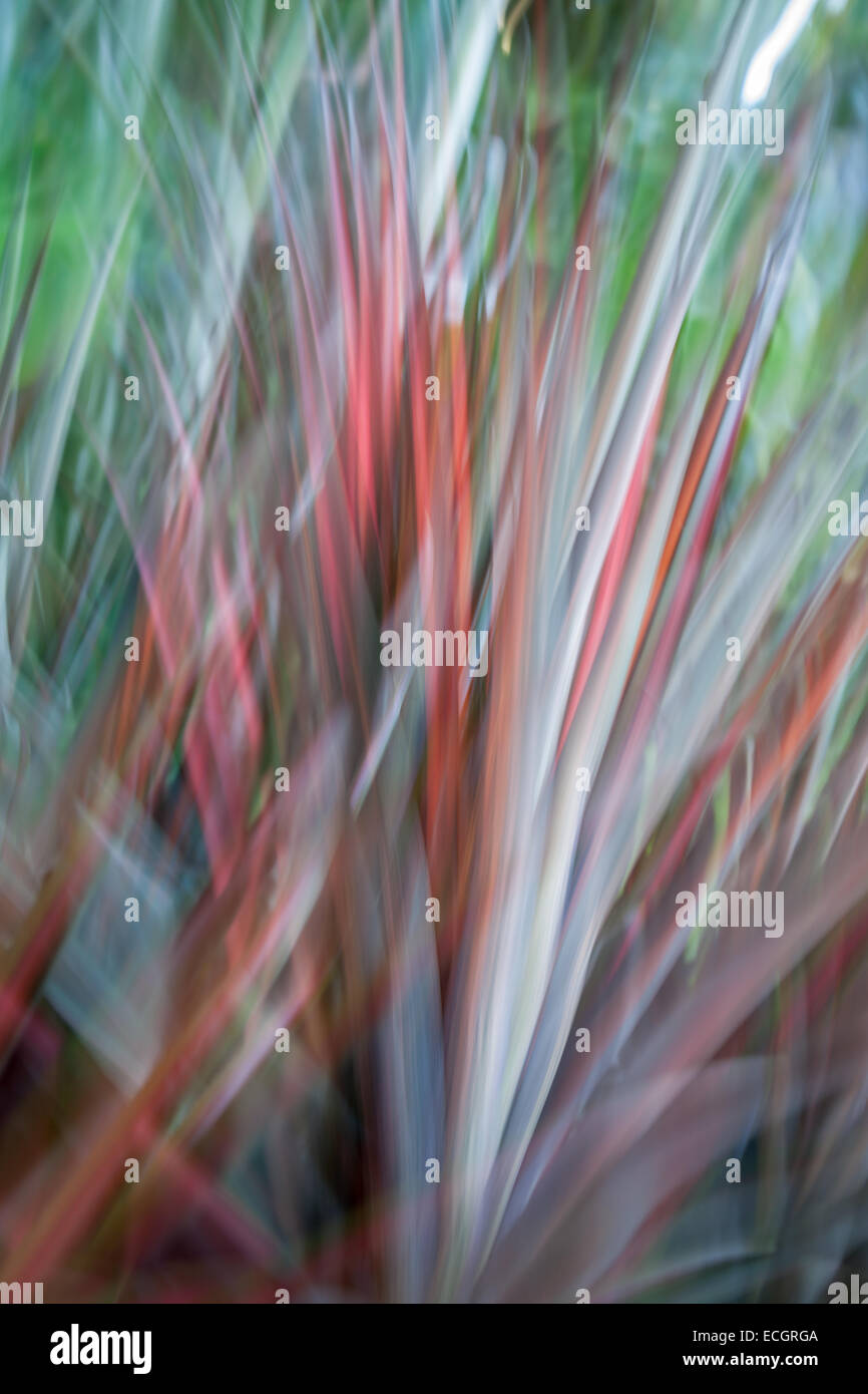 Nature abstract, flax in motion blur. - Stock Image