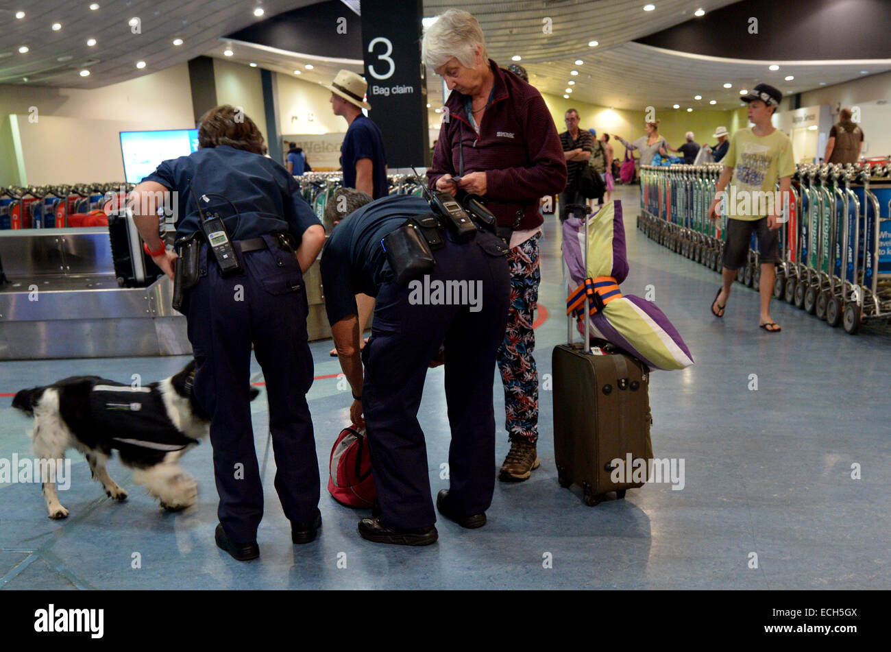 Biosecurity officers with sniffer dog on duty.New Zealand has very strict biosecurity procedures at airports and - Stock Image