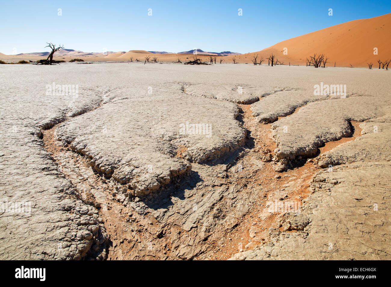 Parched earth and dead trees, Deadvlei, Sossusvlei, Namibia - Stock Image