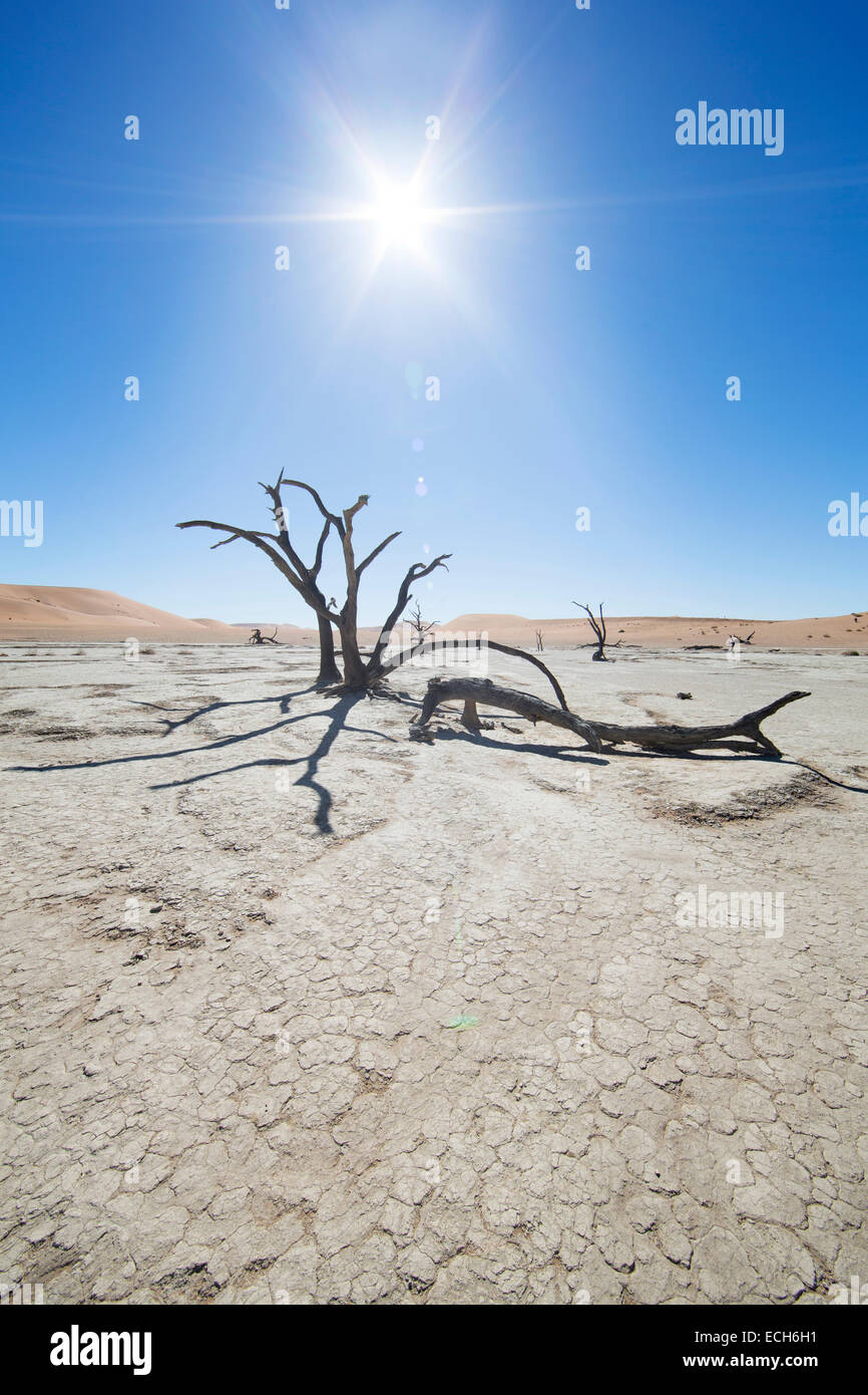 Dead trees in backlight, Deadvlei, Sossusvlei, Namibia - Stock Image