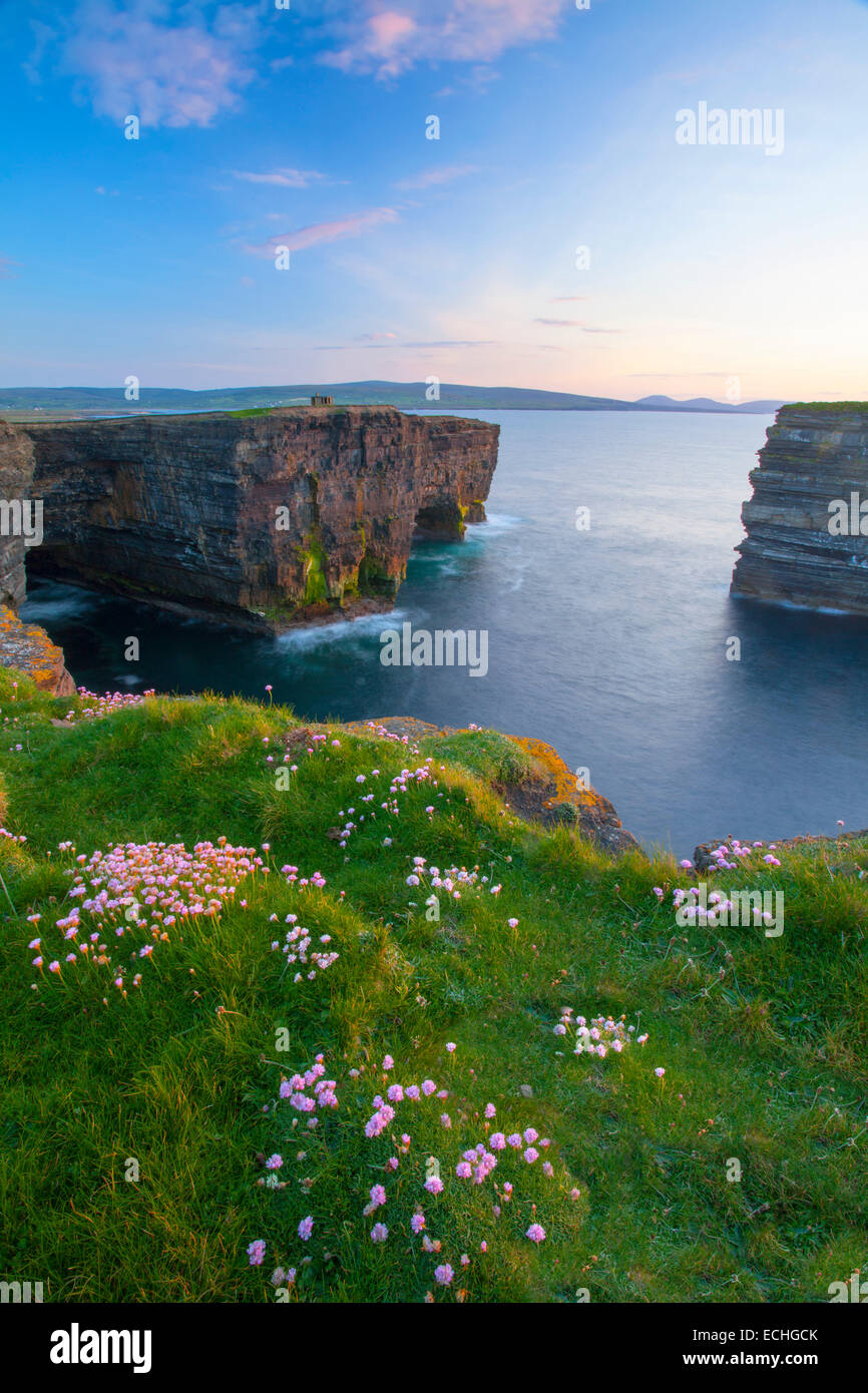 Thrift growing on the clifftop at Downpatrick Head, County Mayo, Ireland. - Stock Image