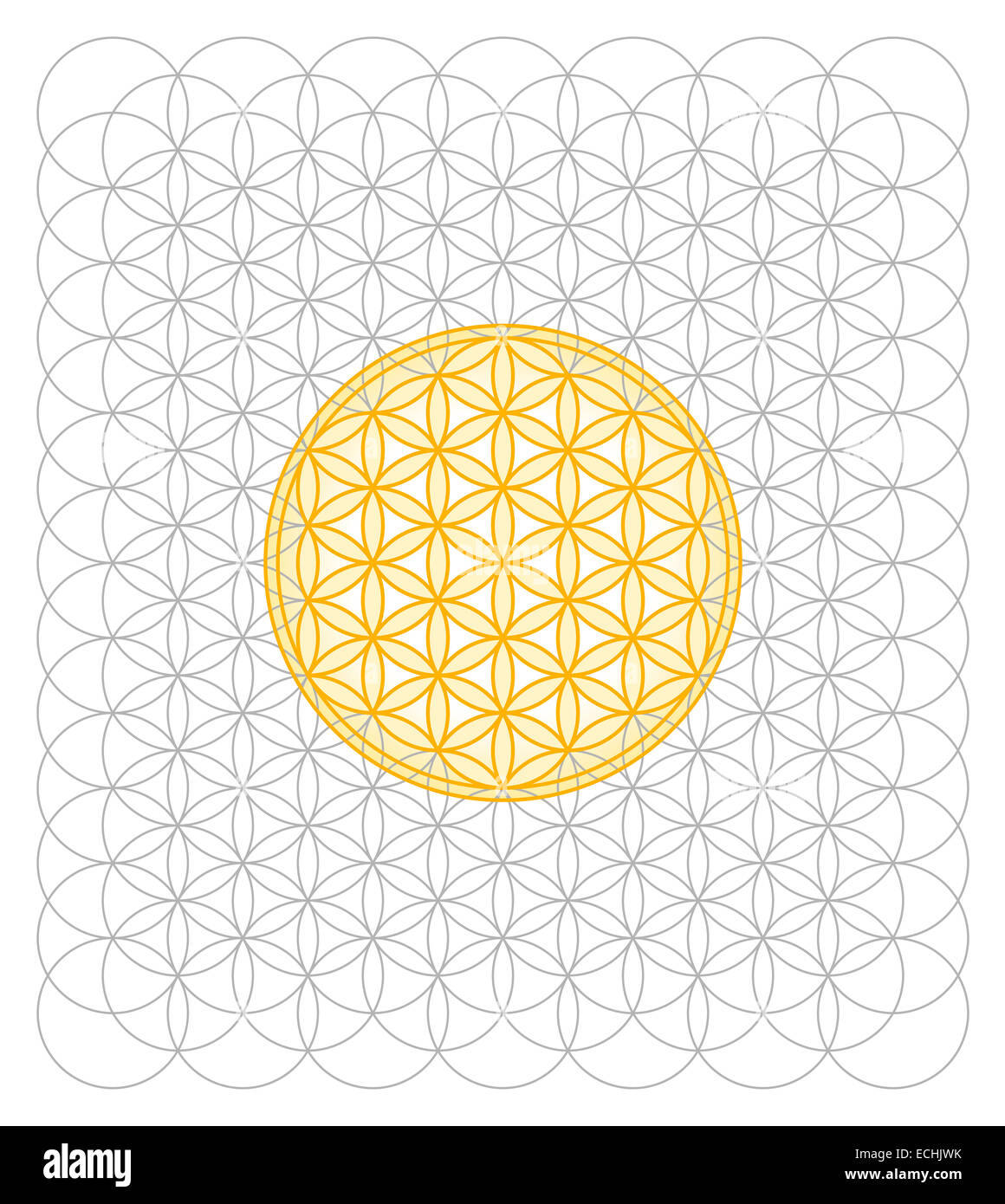 Development of Flower of Life from a sea of circles. Sacred geometry forming a flower-like pattern. Spiritual symbol. - Stock Image