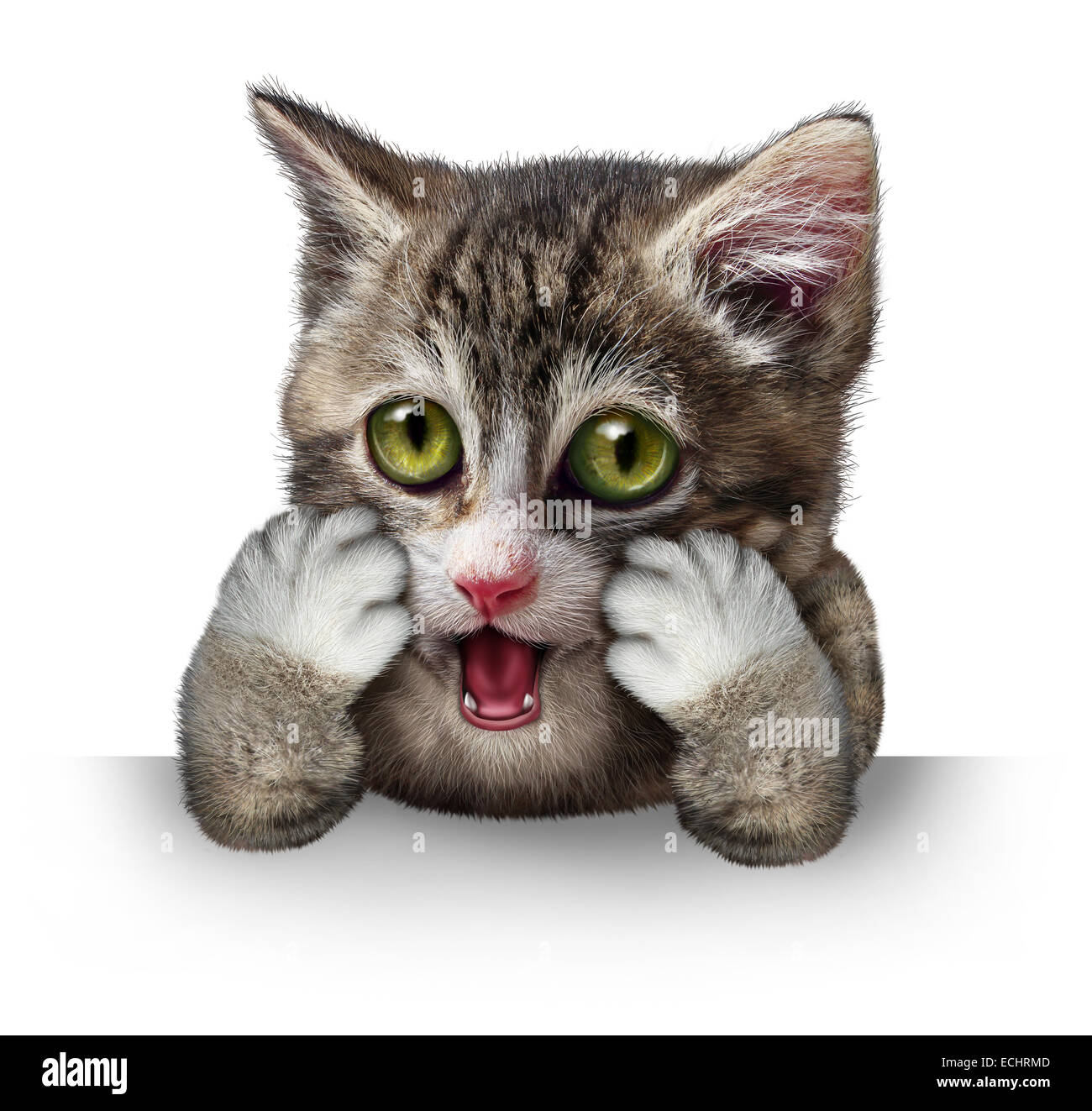 Surprised cat character as a purebred kitten with an anthropomorphic expression of fear on a horizontal blank sign - Stock Image