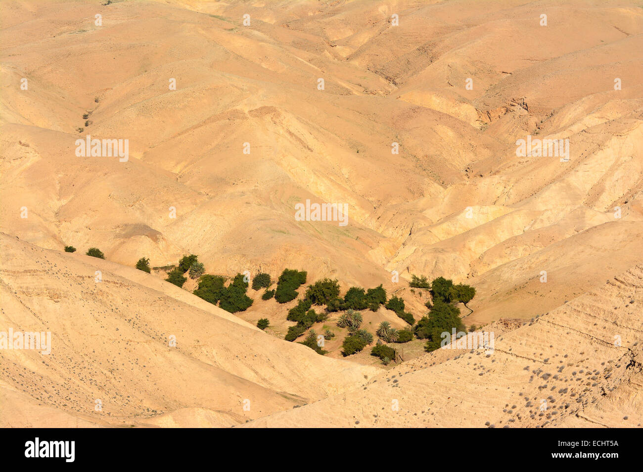 Oasis in the desert - Stock Image