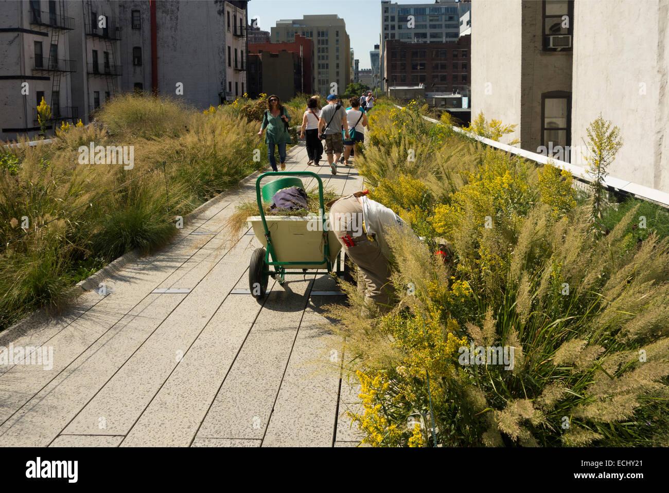 Superior High Line Park Garden New York City
