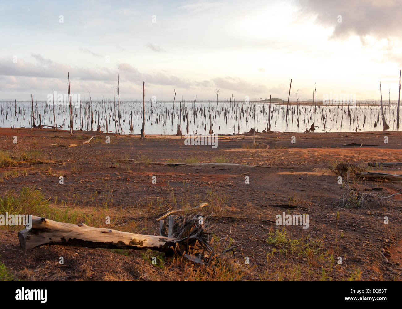 Sunrise at Matu Island: trunks and roots as last remains of the submerged rainforest in Lake Brokopondo, Suriname - Stock Image