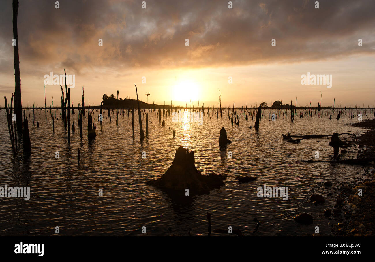 Sunset at Matu Island: trunks and roots as last remains of the submerged rainforest in Lake Brokopondo, Suriname - Stock Image