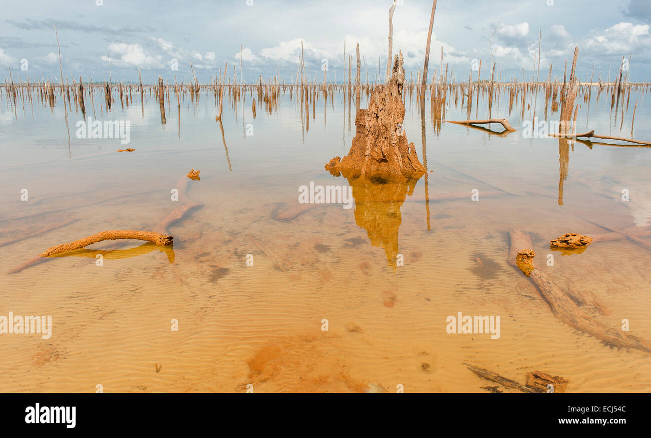 Tree trunks are the only remains of the rainforest flooded to build Lake Brokopondo, Blommensteinmeer, Suriname - Stock Image