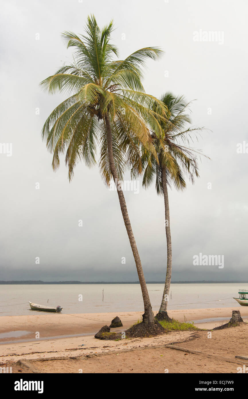 Boat moored next to palms on the beach of Christiaankondre, Galibi, Suriname - Stock Image
