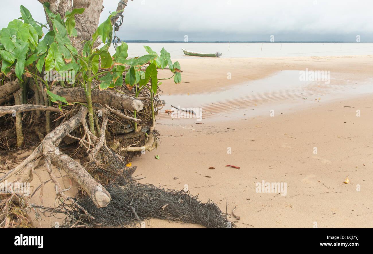 Mangrove roots and canoe on the sandy beach of Christiaankondre, Galibi, Suriname - Stock Image