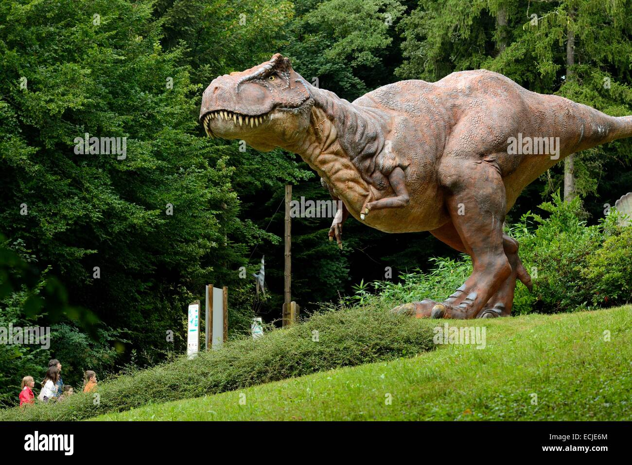 France, Doubs, Charbonnieres les Sapins, Dino Zoo prehistoric park, Tyrannosaurus rex - Stock Image