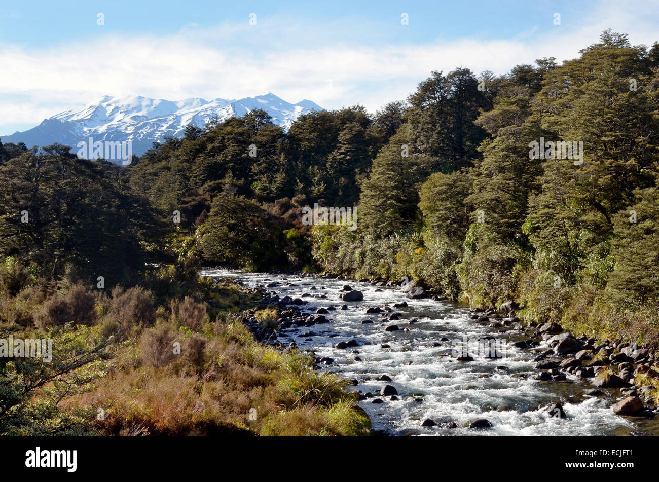 Mahuia River in Tongariro National Park.It's the oldest national park in New Zealand,located in the central - Stock Image