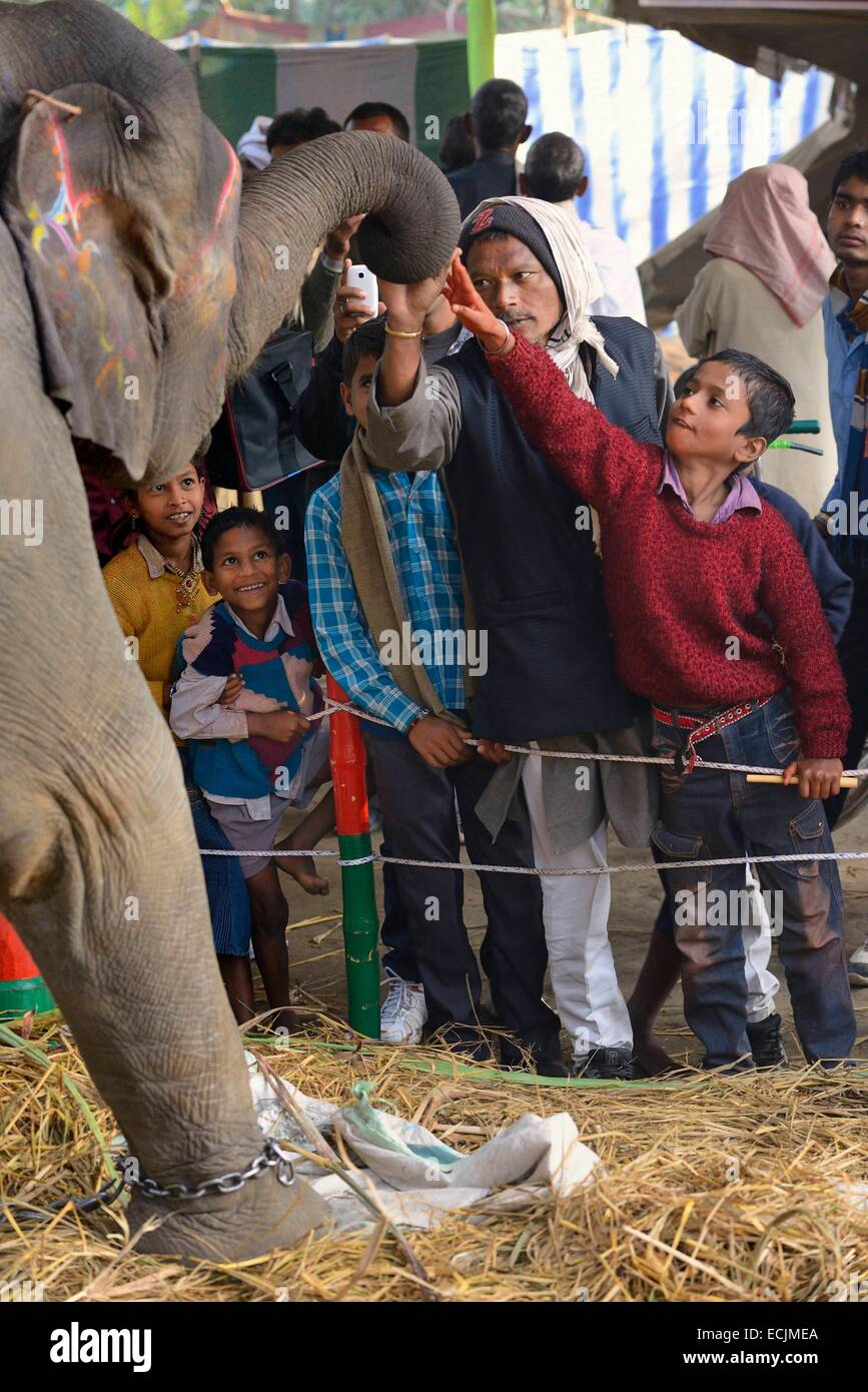 India, Bihar, Patna region, Sonepur livestock fair, The elephant bazar, Adults and children grabing a blessing from Stock Photo