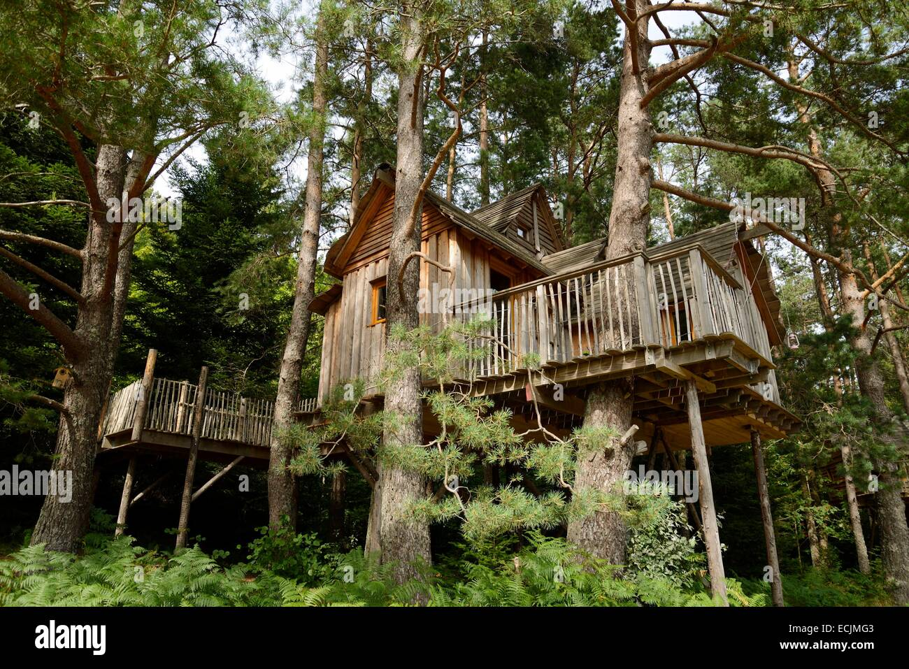 France, Vosges, Champdray, Nids des Vosges, treehouse in the trees - Stock Image