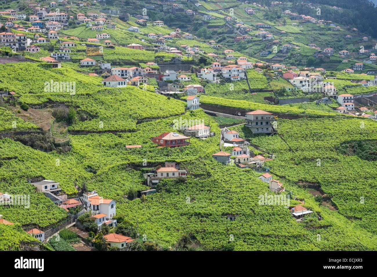 Portugal, Madeira island, hiking along the levada do Norte, vineyard around Estreito de Camara de Lobos Stock Photo