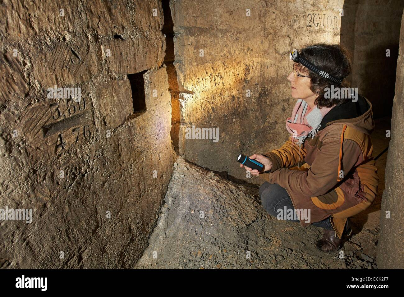 France, Paris, National Museum of Natural History, Christine Rollard, araneologist, illuminating a cavity in the - Stock Image