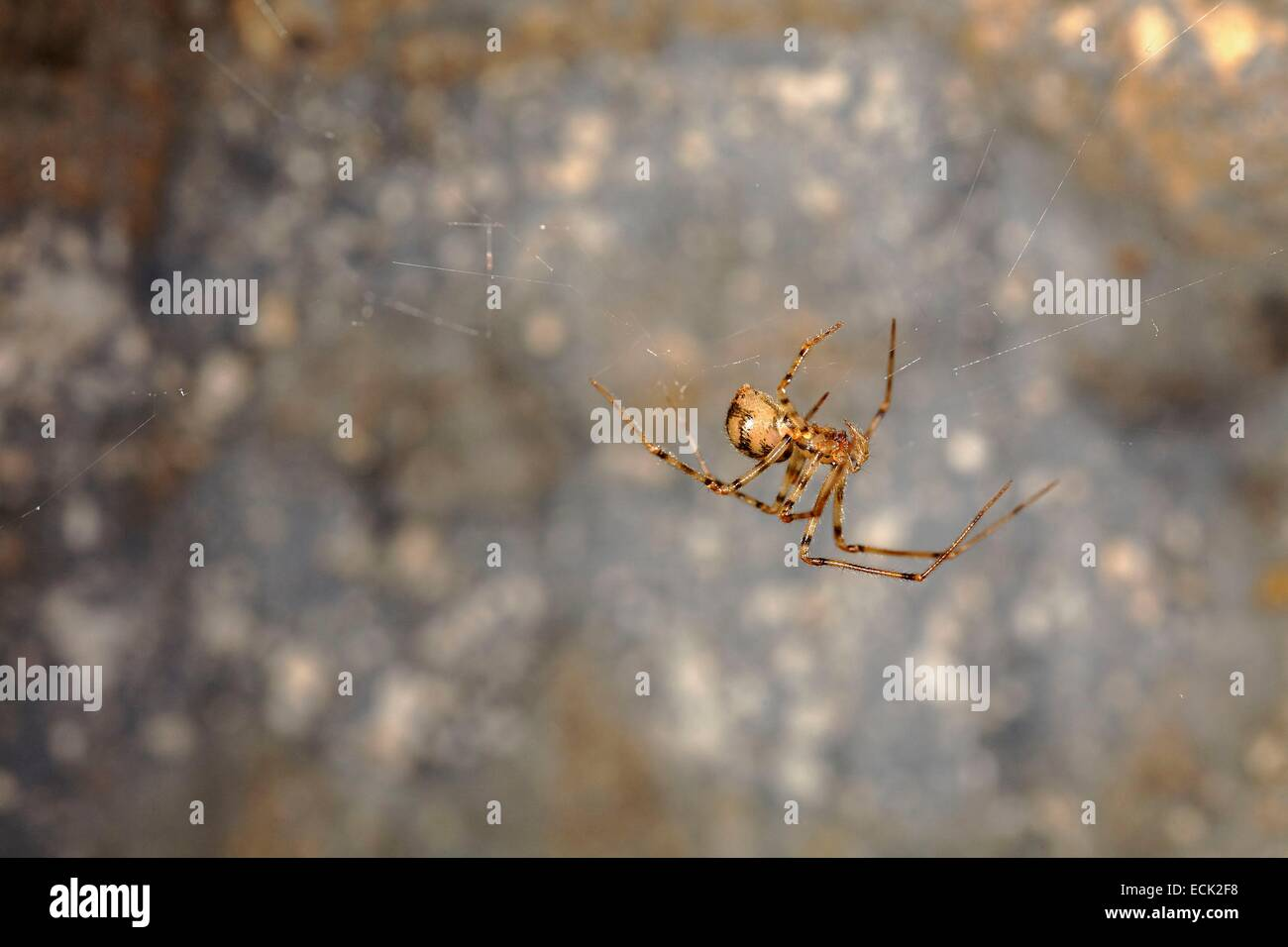 France, Paris, National Museum of Natural History, Underground quarries under the botanical garden, Nesticidae, - Stock Image