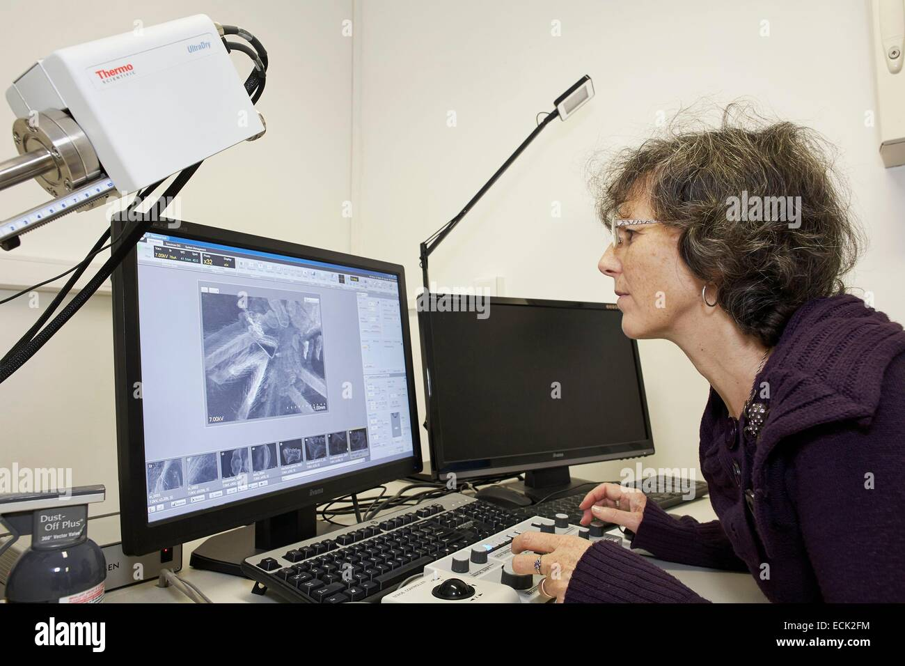 France, Paris, National Museum of Natural History, Christine Rollard, araneologist, taking pictures of arachnids - Stock Image