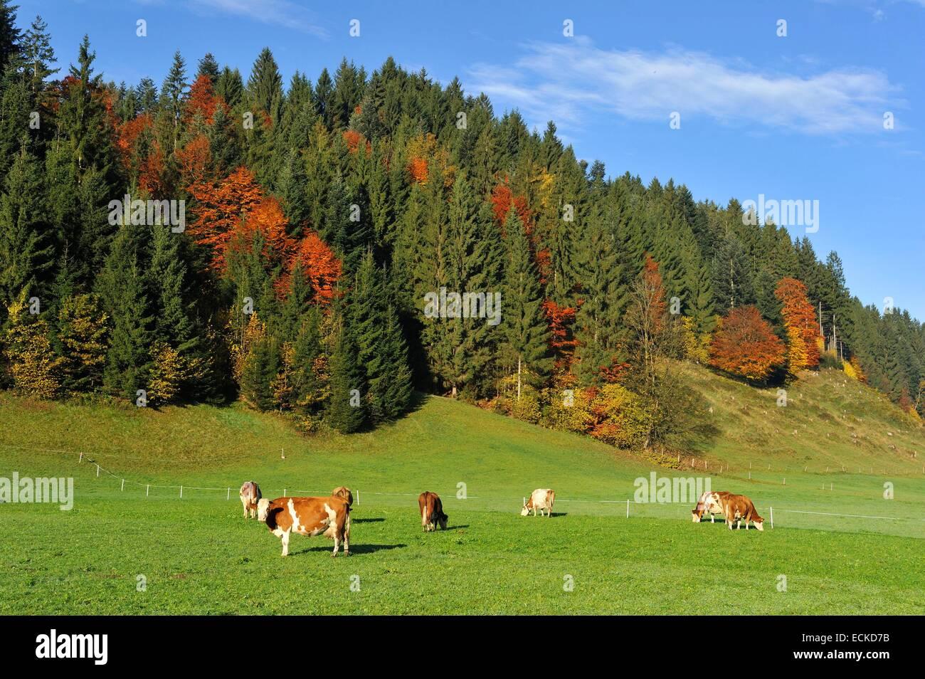 Austria, Tyrol, Oberndorf im Tyrol, Alpine scenery - Stock Image
