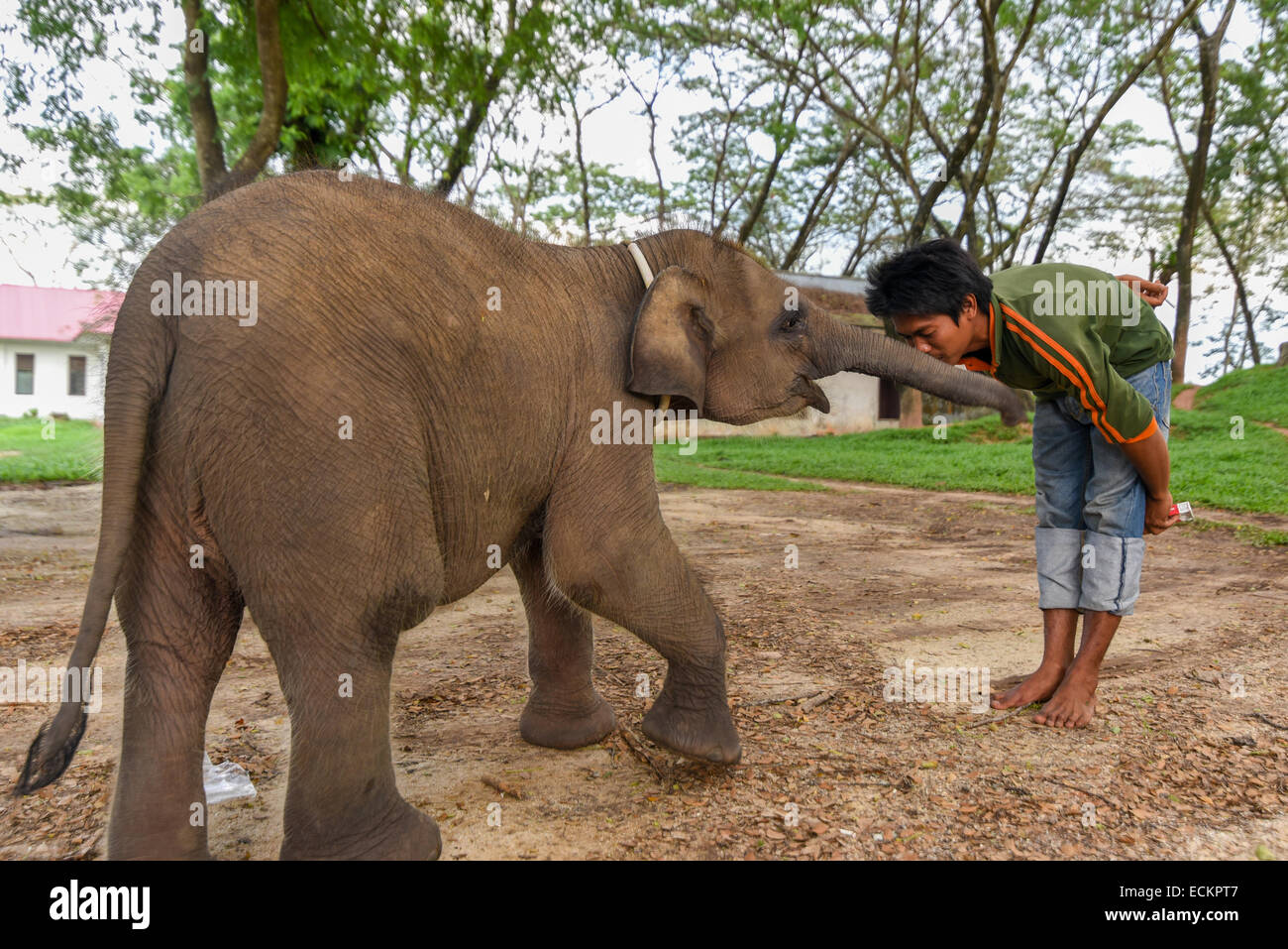 Quality time between a mahout (elephant keeper) and its baby elephant named Yeti in Way Kambas National Park. - Stock Image