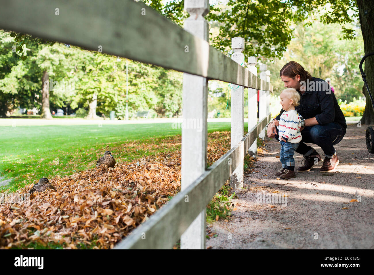 Father and baby girl looking at ducks through wooden fence in park - Stock Image