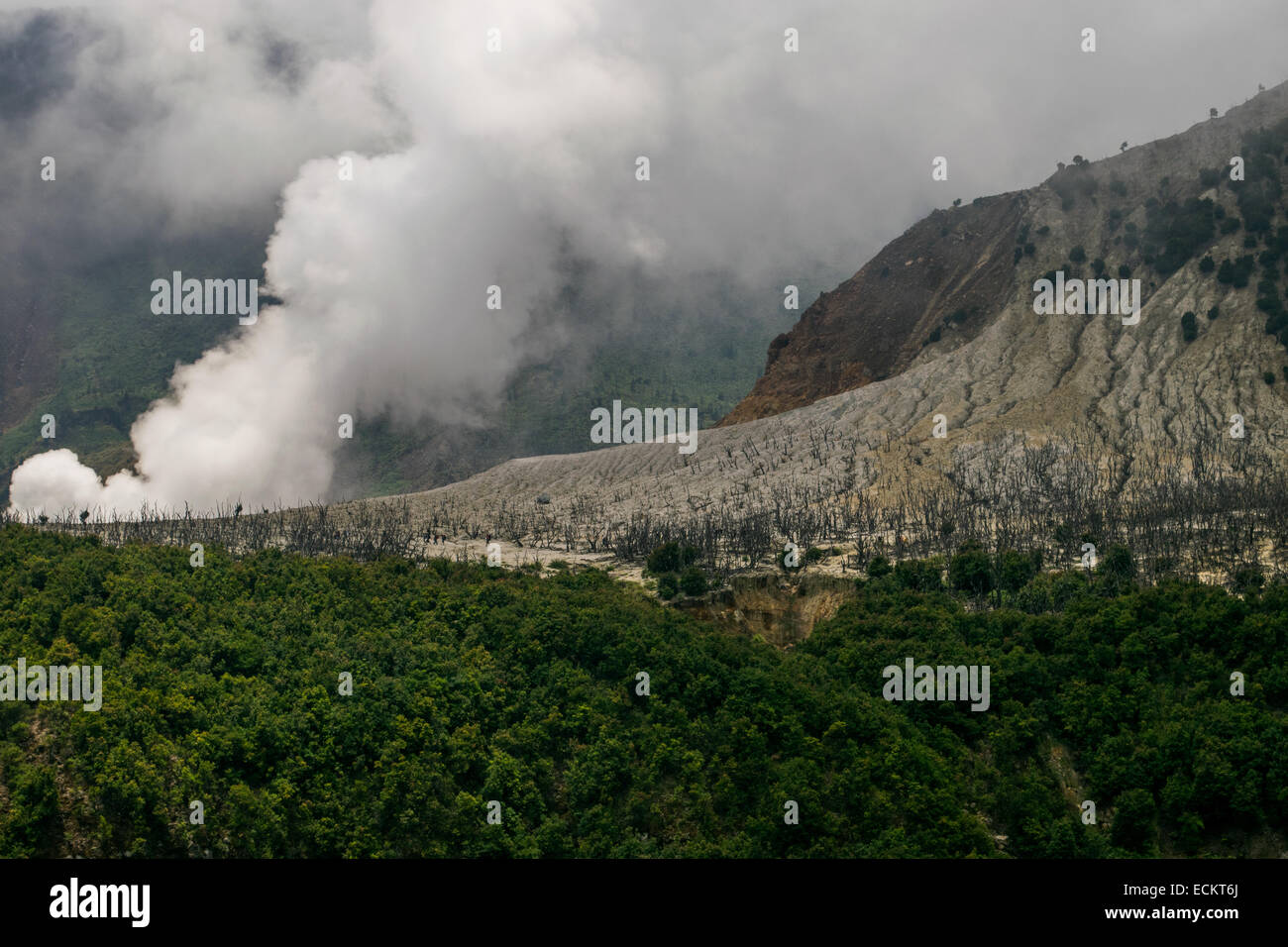 The crater and partially dead forest of Mount Papandayan seen from distance. - Stock Image