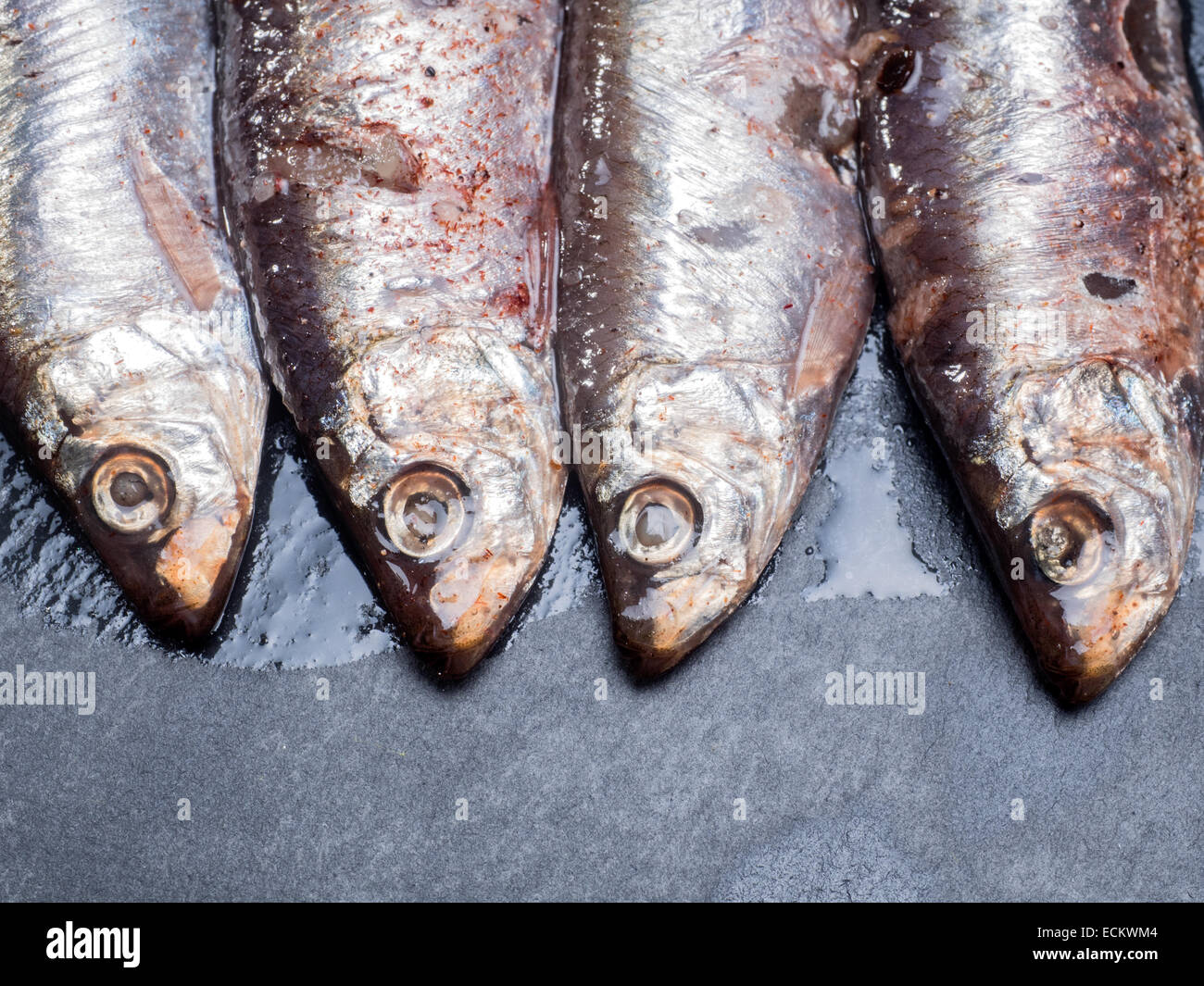 Anchovies sardines all ready to eat - Stock Image