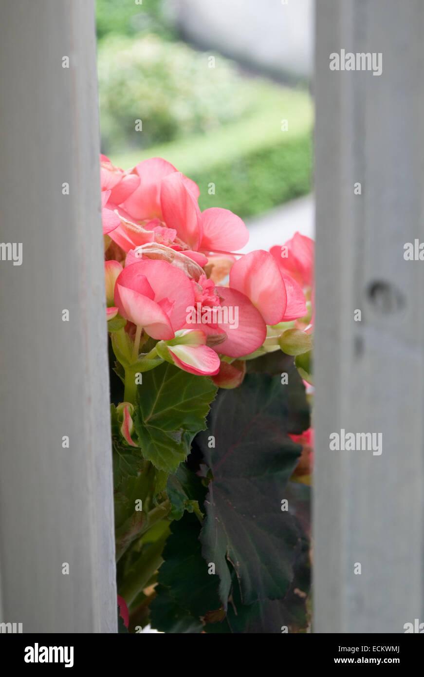 Flowers on windowsill - Stock Image