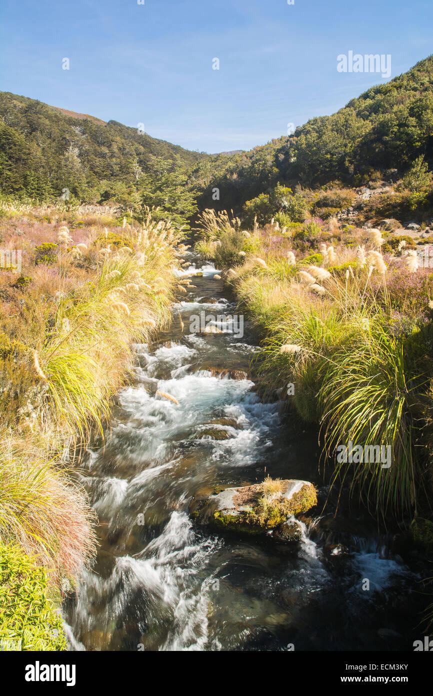 Waihohonu stream, Northern Circuit hike, Tongariro National Park, North Island, New Zealand - Stock Image