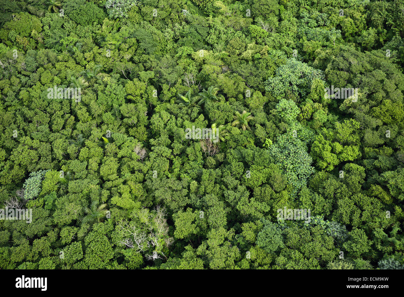 Aerial view of tropical rain forest treetops on Mount Isabel de Torres Puerto Plata Dominican Republic - Stock Image