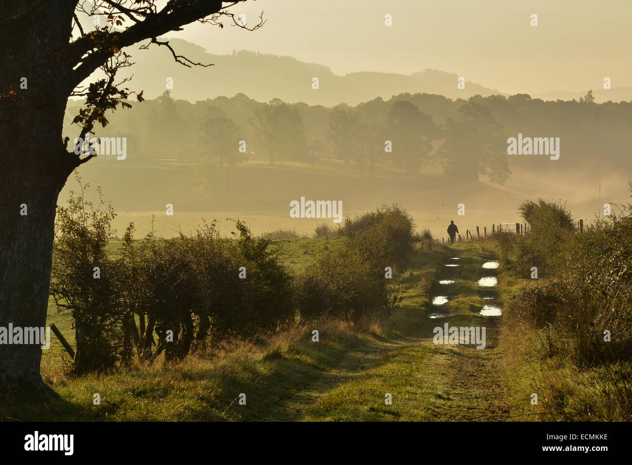 silhouette of solitary man in golden age enjoying a walk along a country lane during a beautiful autumn sunrise - Stock Image