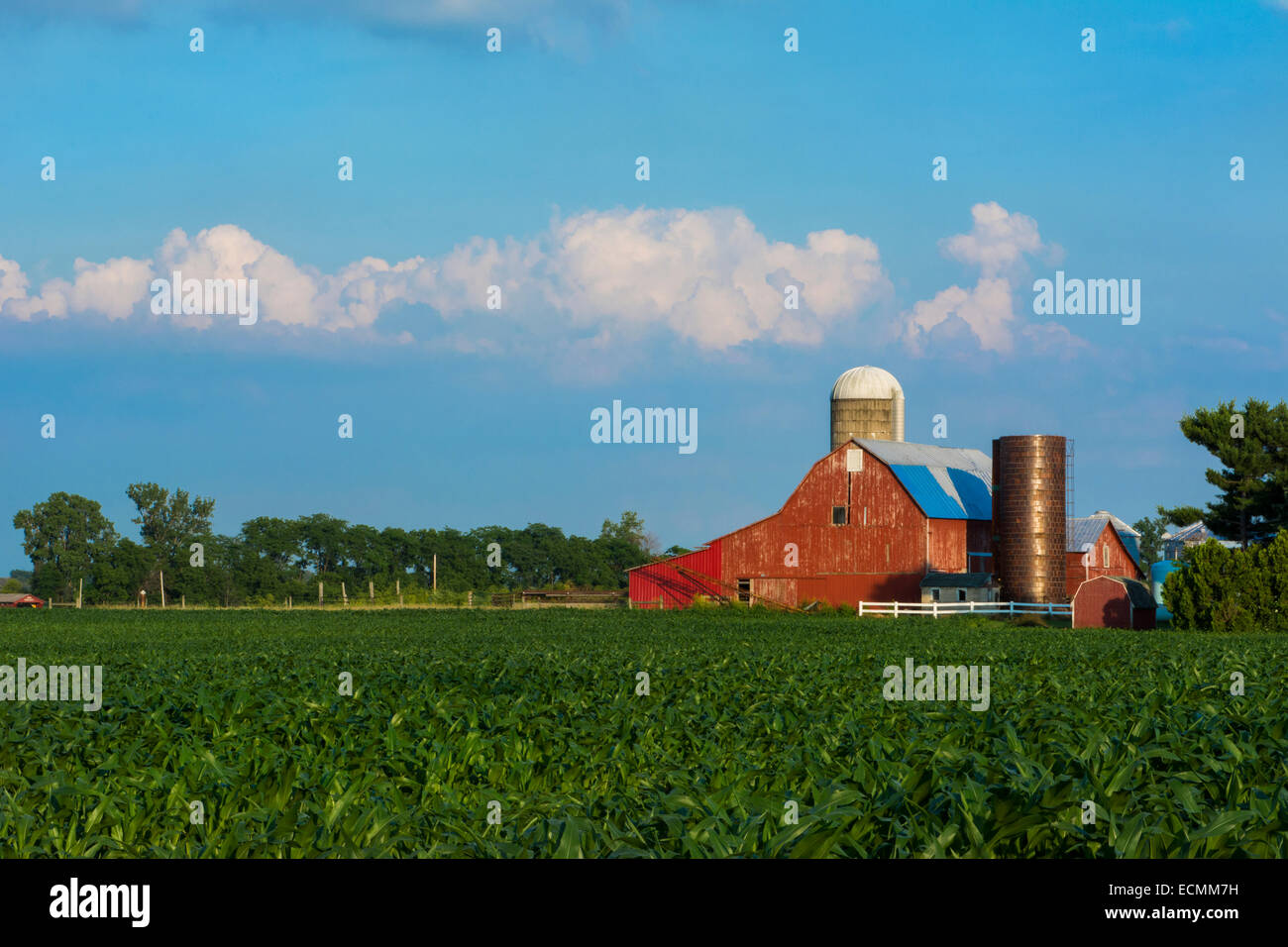 Milford Center Ohio farm with red barn and corn owned by Jim Watkins and Midwest farming near Columbus - Stock Image