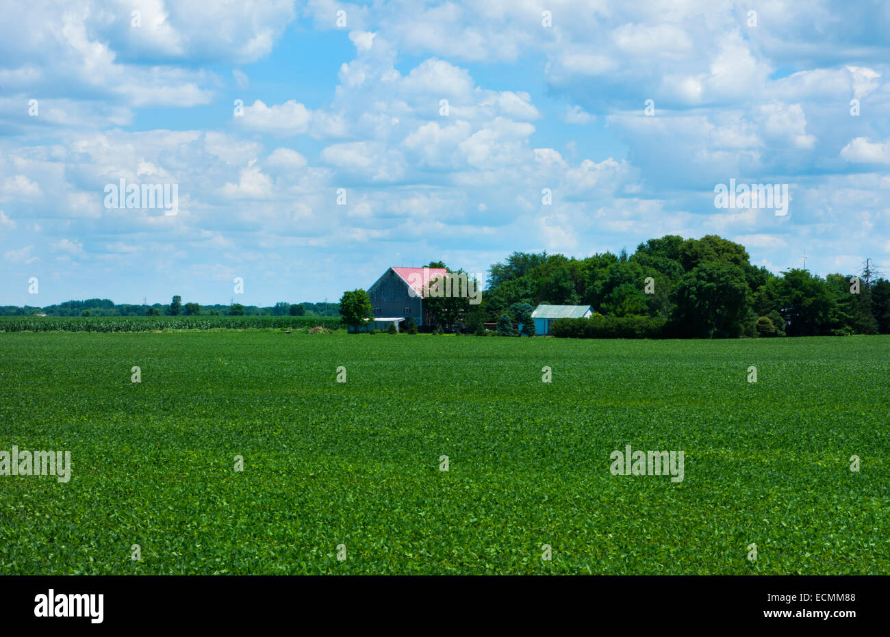 Kankakee Illinois farming in Midwest on sunny day with clouds - Stock Image