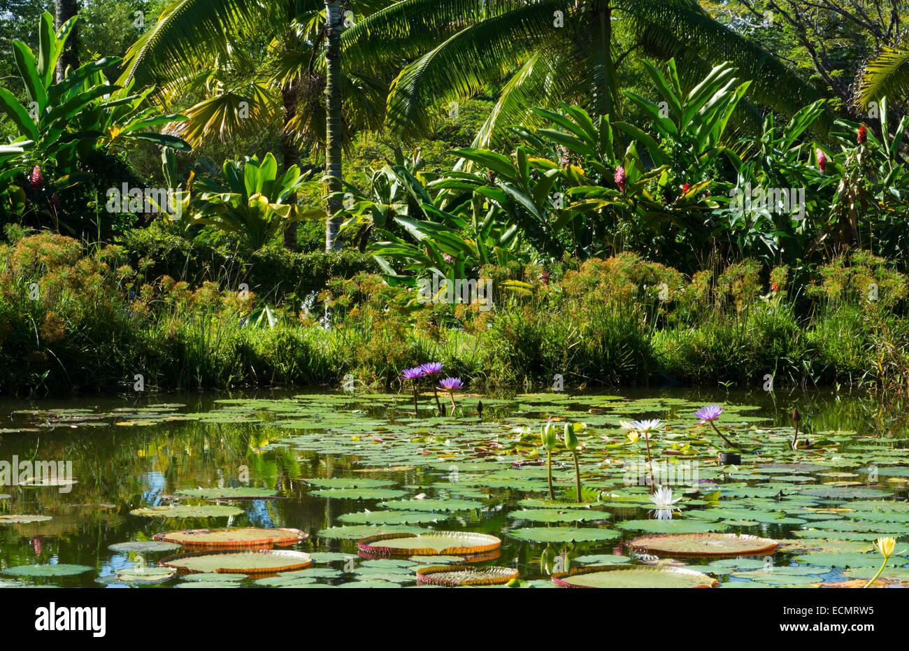 Hilo Hawaii Big Island Panaewa Rain Forest Zoo and Gardens water lillies green peaceful - Stock Image