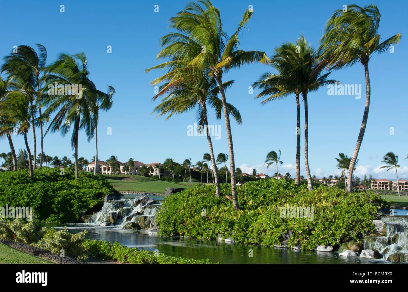 Waikoloa Hawaii Big Island Beautiful Water And Palm Trees ...
