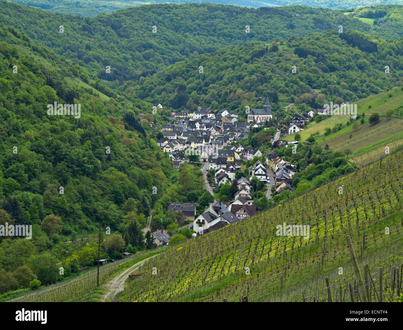 Village of Oberdiebach among the vineyards on west bank of the Rhine, upstream of Bacharach, Rhine Gorge, Germany - Stock Image