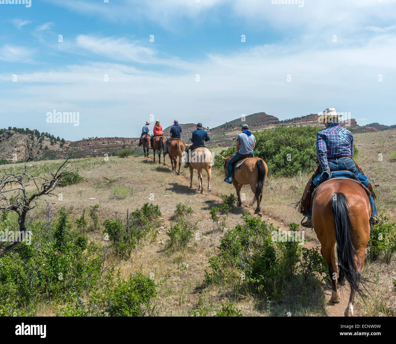 Horseback riding at the Sylvan Dale Guest Ranch. Colorado. USA - Stock Image