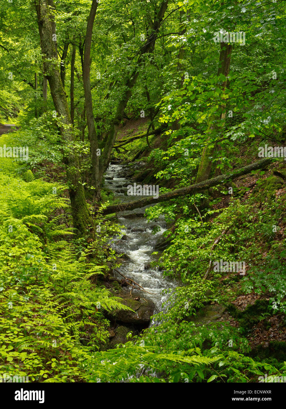Stream in the forest of Morgenbach valley south of Trechtingshausen, along west bank of the Rhine, Bingen Forest, - Stock Image