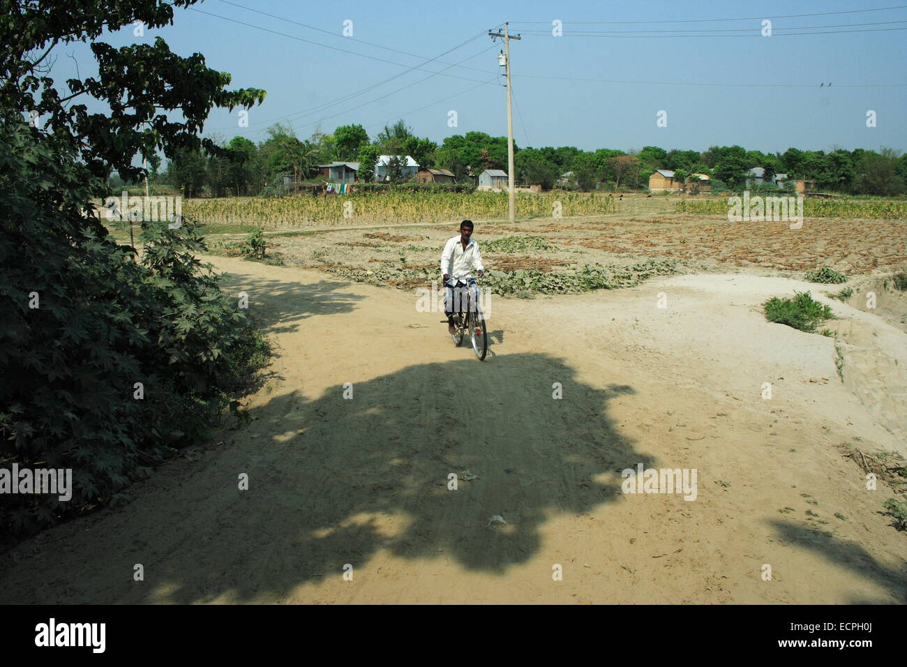 December 2010.Tobacco field in manikganj out site of Dhaka - Stock Image