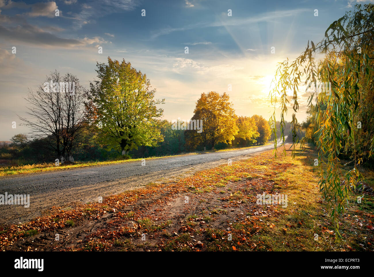 Highway through the beautiful autumn forest and bright sun - Stock Image