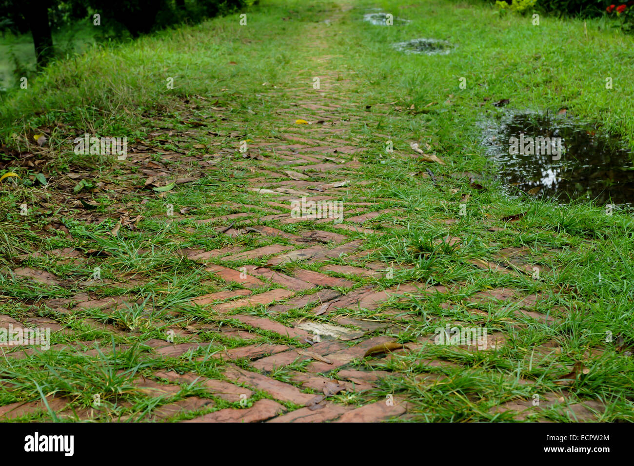 brick path covered in grass - Stock Image