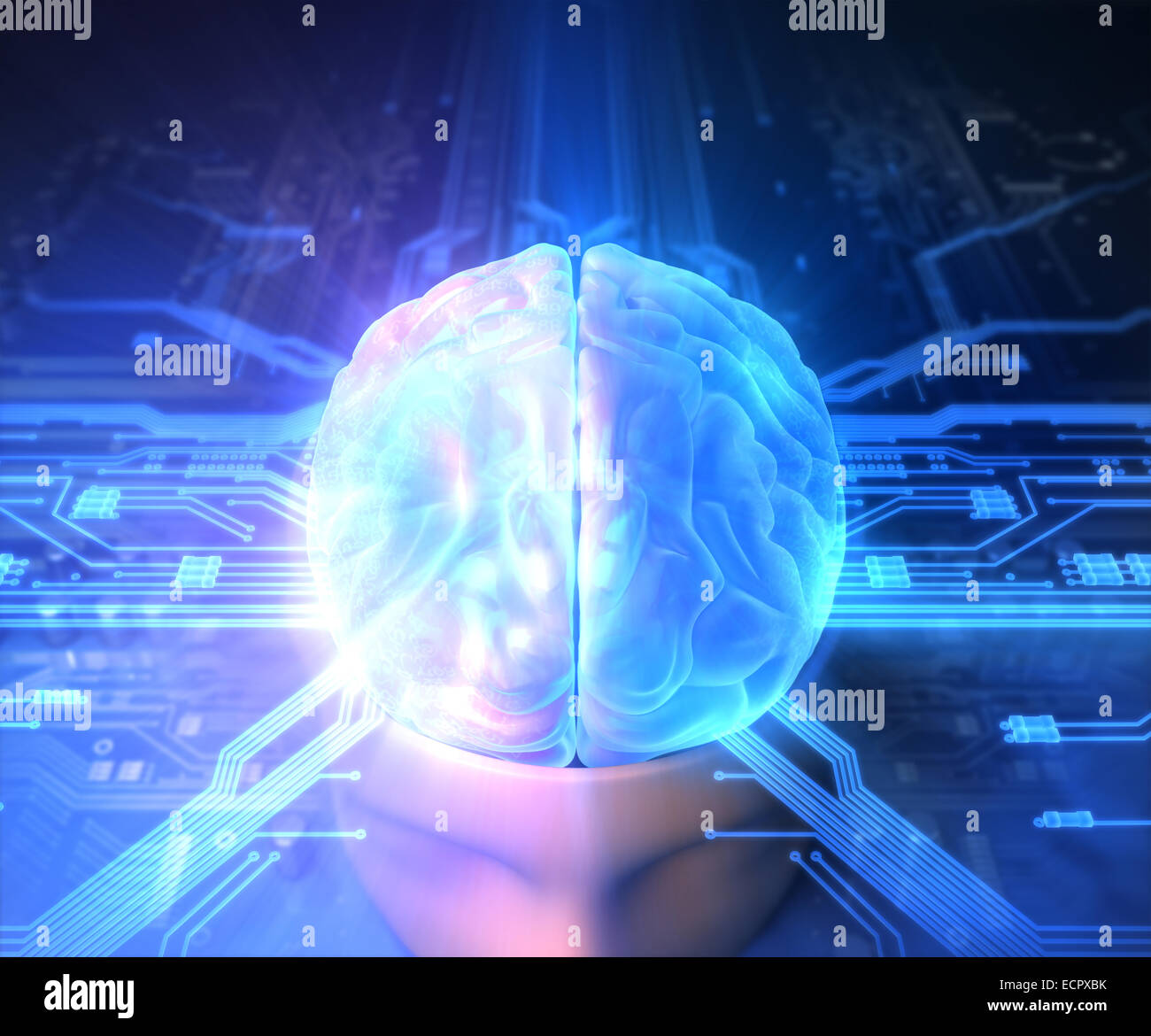 Human brain and circuit board. - Stock Image