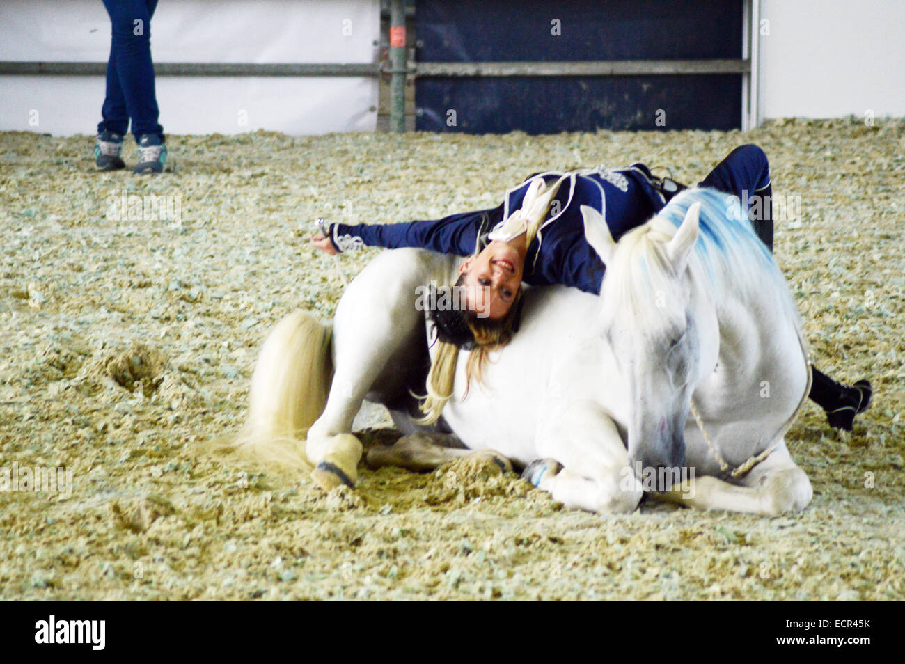 Show The spectacular movement Woman jockey in blue suit rotates on a white horse. International Horse Exhibition - Stock Image