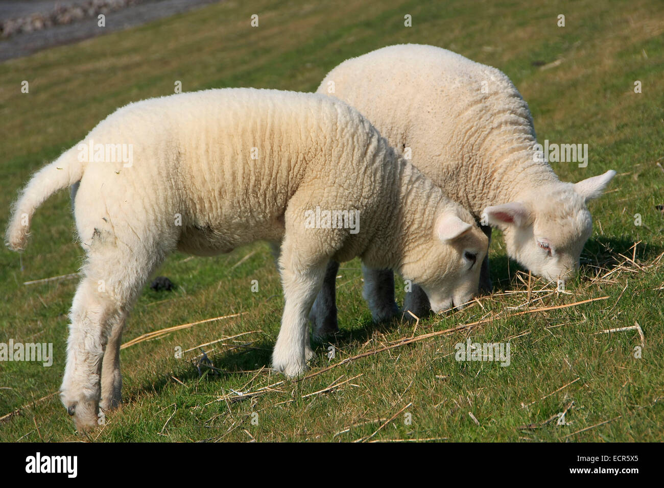 Tiefen Stock Photos & Tiefen Stock Images - Alamy