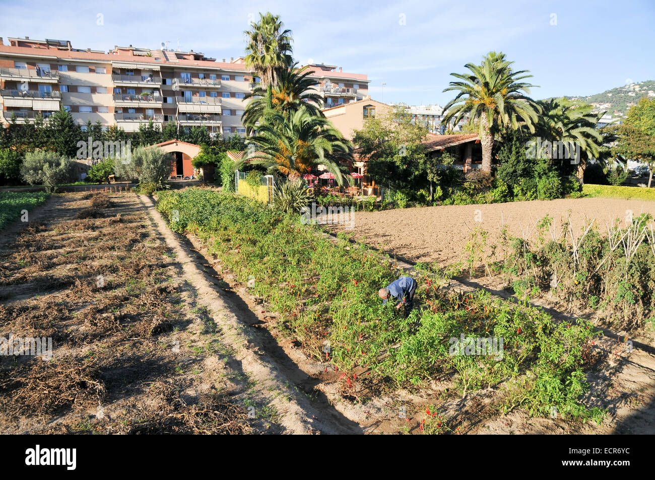 Spanish farmers works in his field. Photographed near Girona, Catalonia, Spain Stock Photo