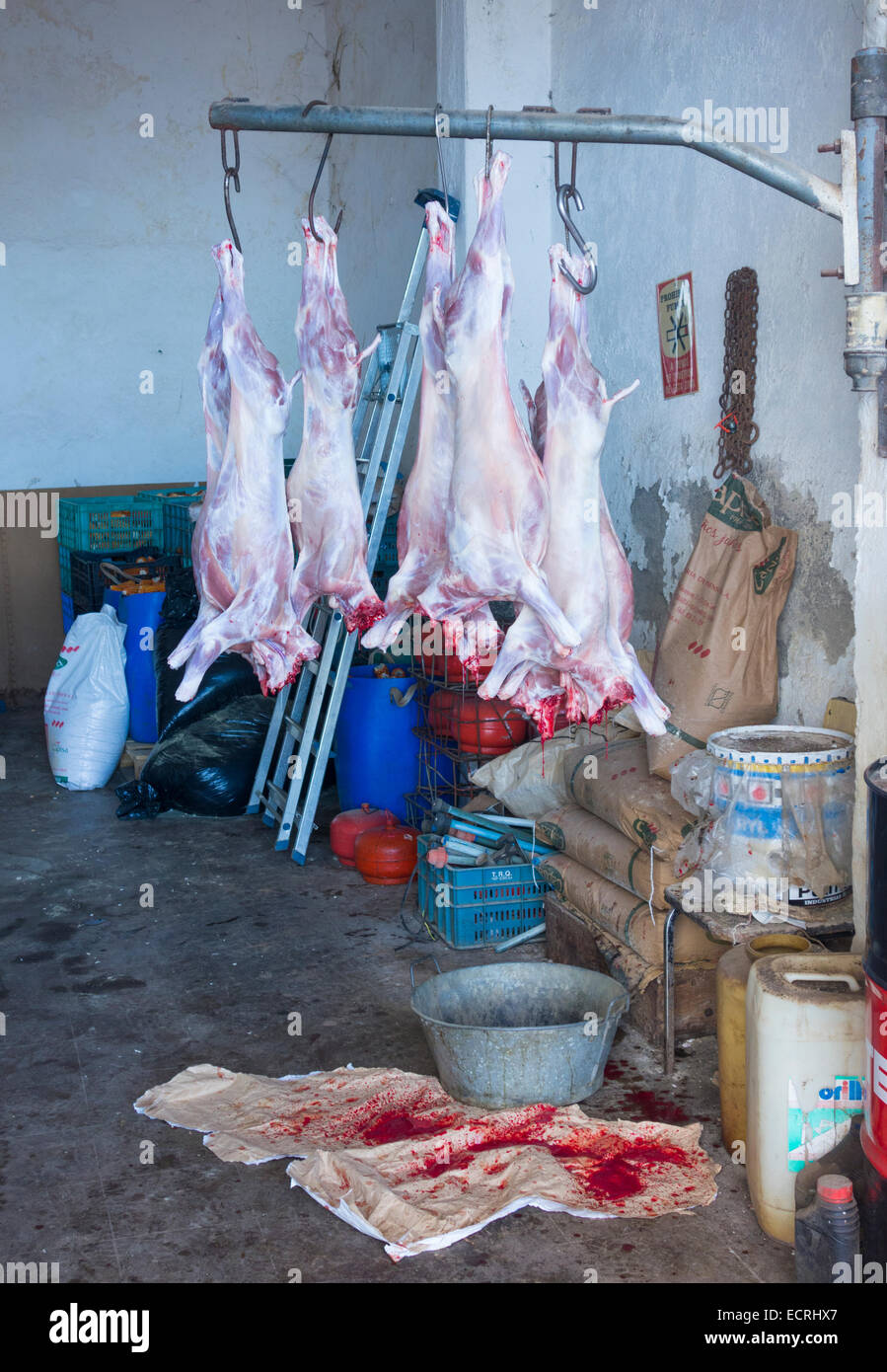 Recently slaughtered Lambs hanging in shed on small farm in mountains of Gran Canaria - Stock Image