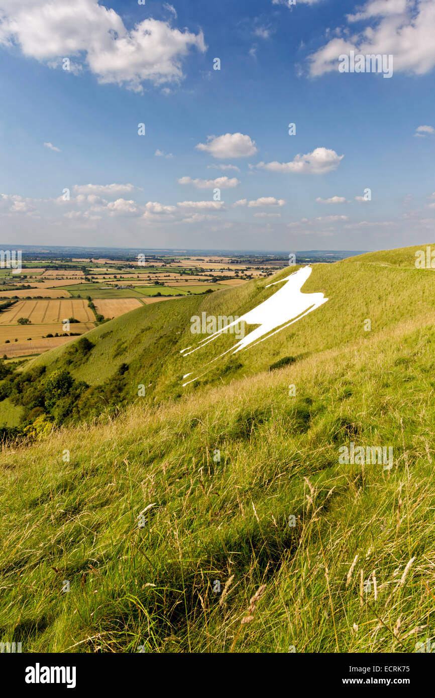 The Westbury White Horse Chalk Hill figure, on the edge of Salisbury Plain, Wiltshire, United Kingdom. Stock Photo