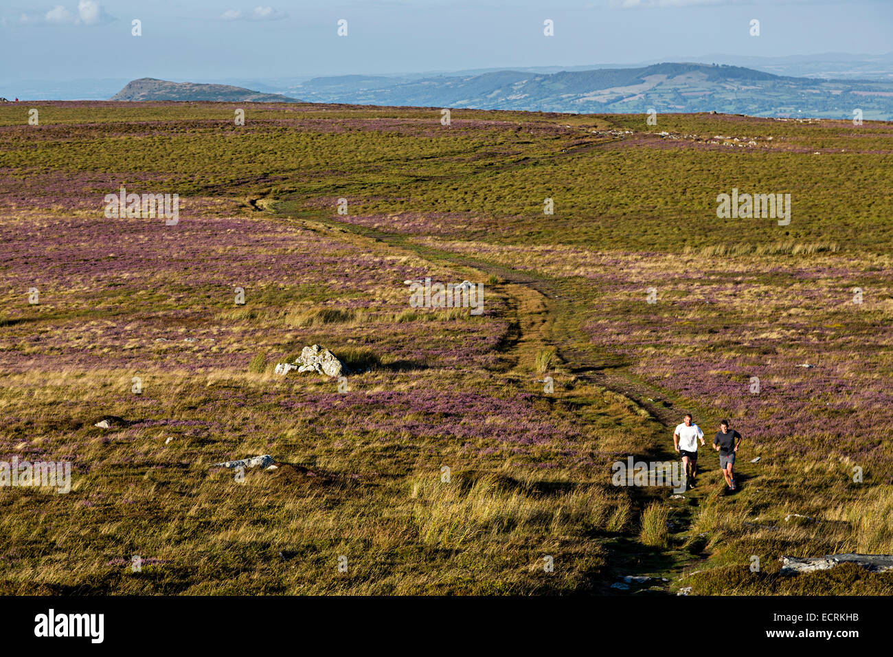 Two people fell running across heather moorland, The Blorenge, Abergavenny, Wales, UK - Stock Image